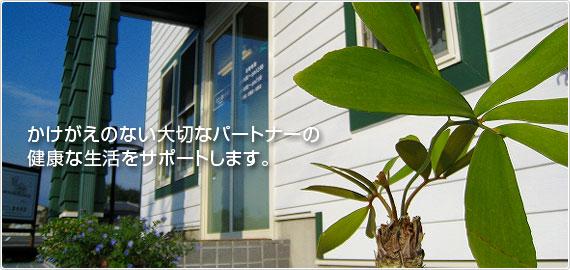 ひごし動物病院は、優しく丁寧な診察をモットーとする、犬・猫専門の動物病院です。